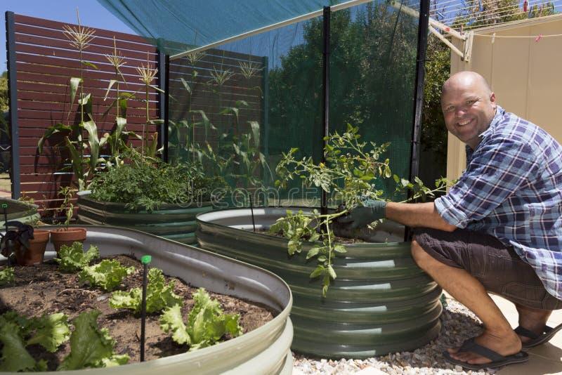 Домашний огород стоковая фотография rf