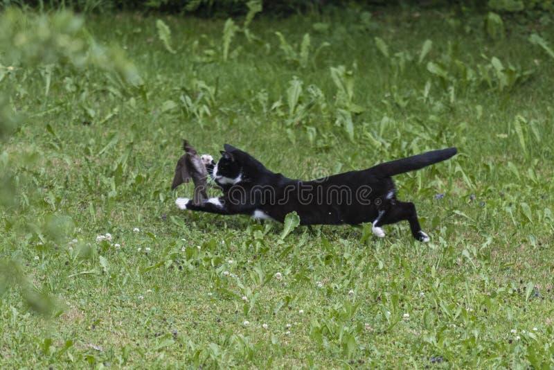 Домашняя кошка охотясь птица стоковые фотографии rf