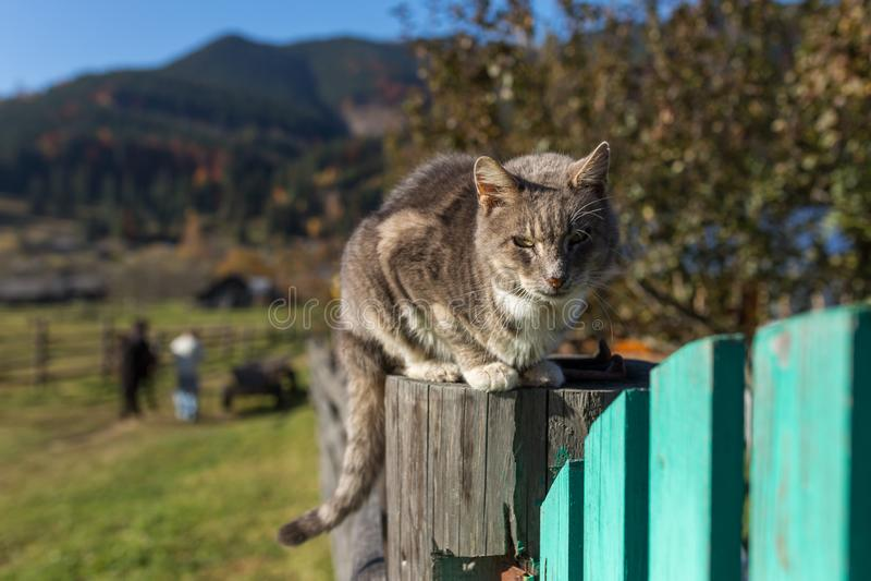 Домашняя кошка сидя на обнесет забором украинскую деревню в прикарпатских горах стоковая фотография