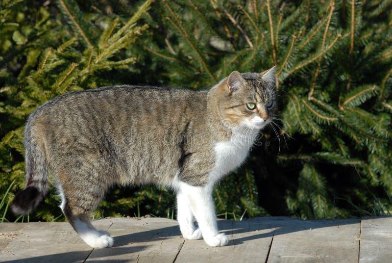 Download Домашняя кошка стоковое изображение. изображение насчитывающей померанцово - 33737921