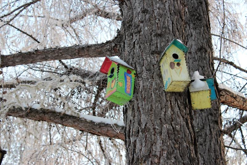 Дома для птиц в парке зимы стоковое изображение
