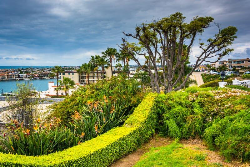 Дома дерева и сада обозревая в Corona del Mar стоковые фото