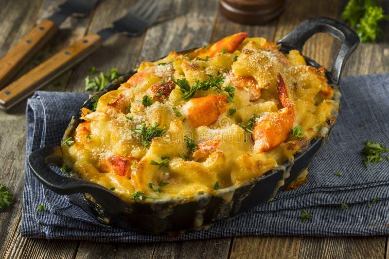 Домодельные макарон и сыр омара стоковое изображение