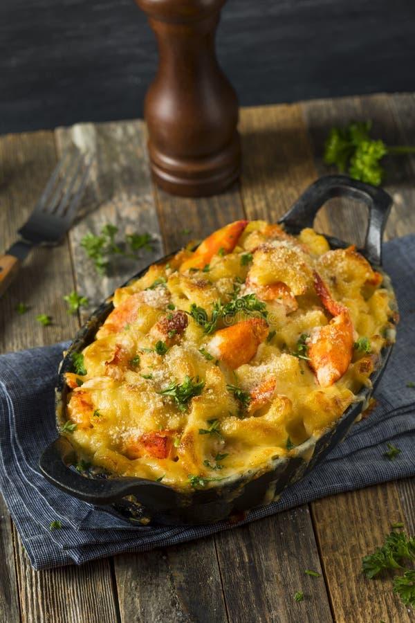 Домодельные макарон и сыр омара стоковая фотография rf