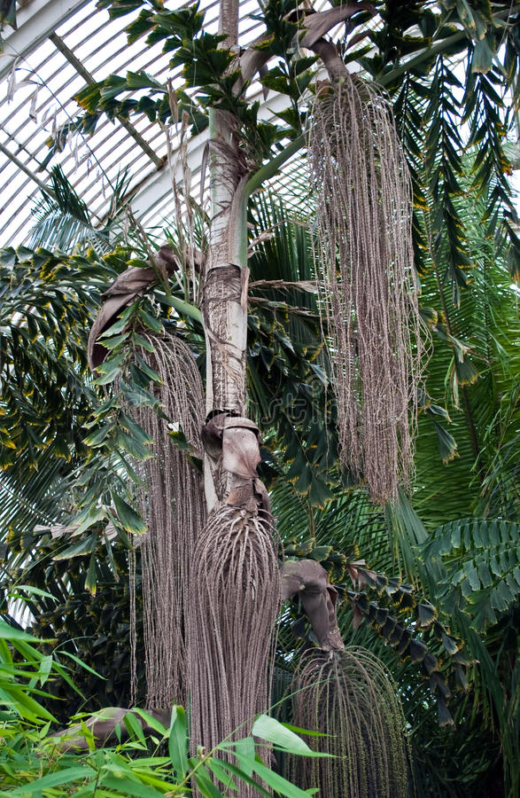 Дом ладони, сады Kew, Лондон стоковая фотография