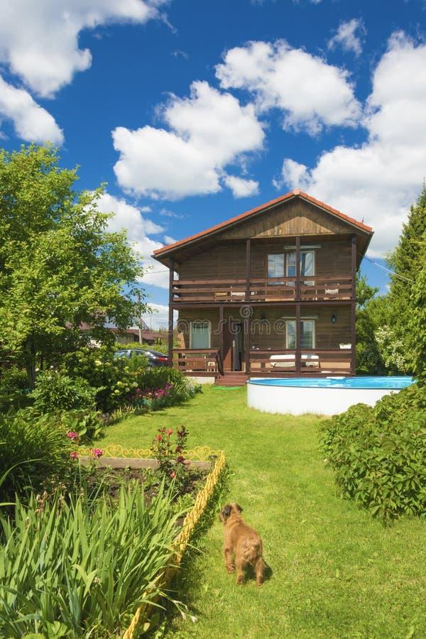 Дом, бассейн и красная собака на зеленой лужайке стоковая фотография