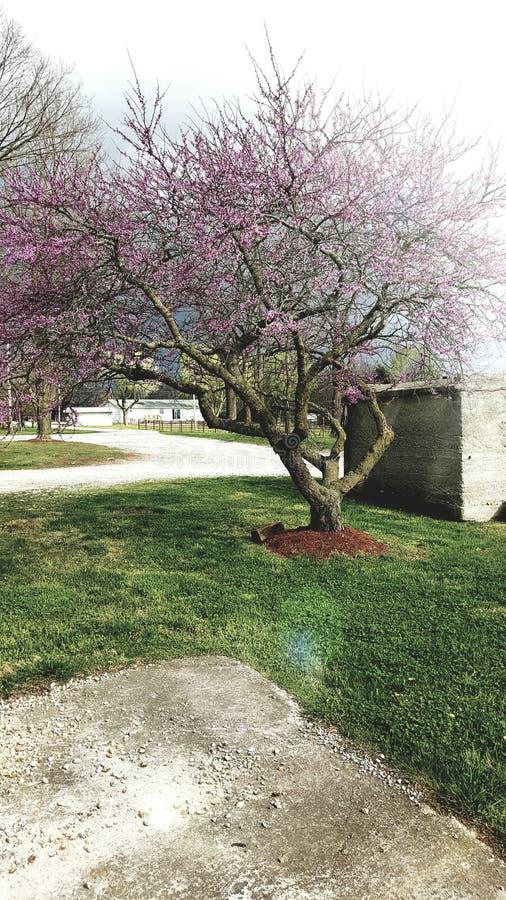 Дом весной стоковые изображения rf