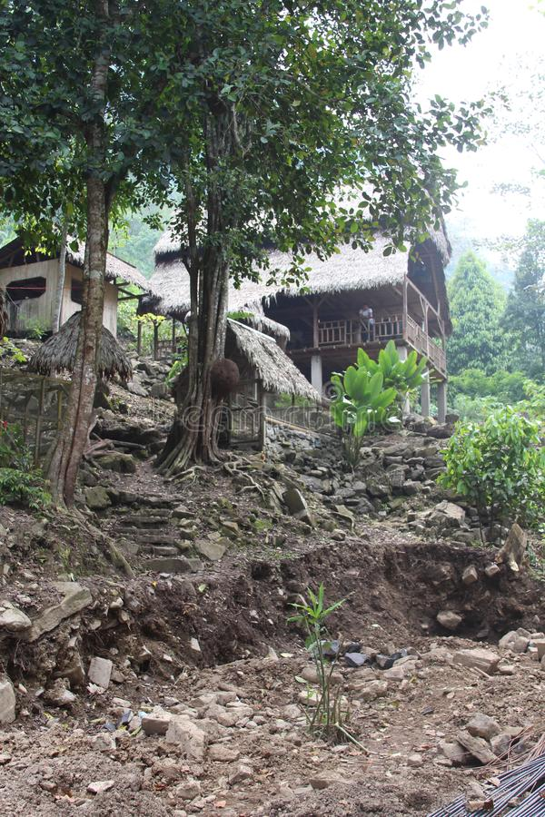 Дом в джунглях стоковые изображения rf