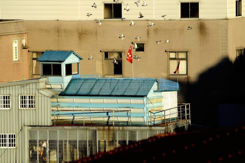 Дом голубя стоковые изображения rf