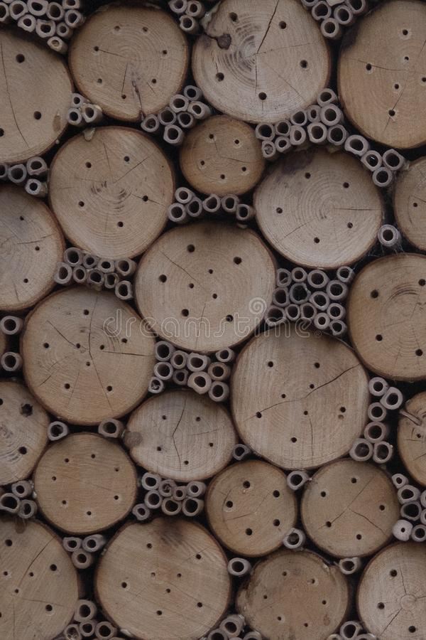 Дом для солитарных пчел стоковая фотография rf