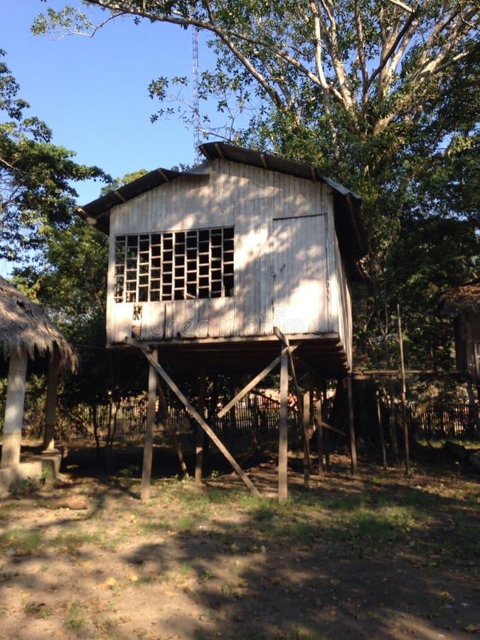 Дом джунглей стоковое изображение rf