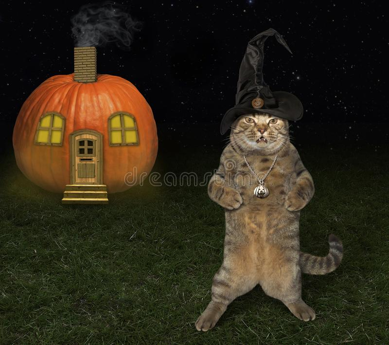 Дом кота и тыквы хеллоуина стоковая фотография