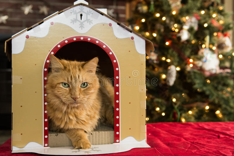 Дом кота рождества стоковые фотографии rf