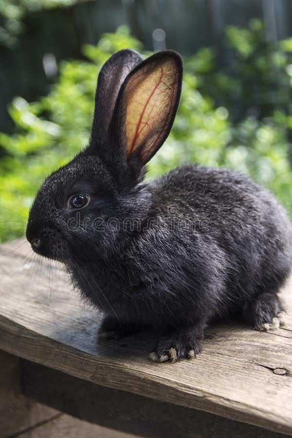 Дом кролика на графике ближе к окружающей среде стоковое фото