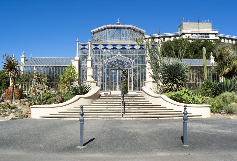 Дом ладони, сад Аделаиды ботанический, южная Австралия стоковая фотография rf