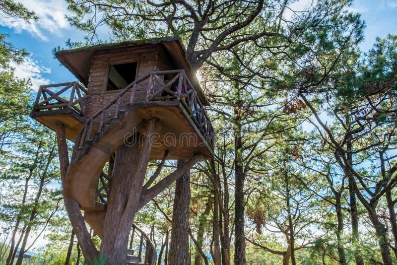 Дом на дереве в Baguio стоковое фото rf