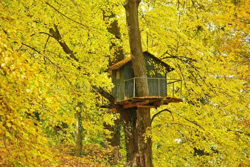 Дом на дереве стоковые фото