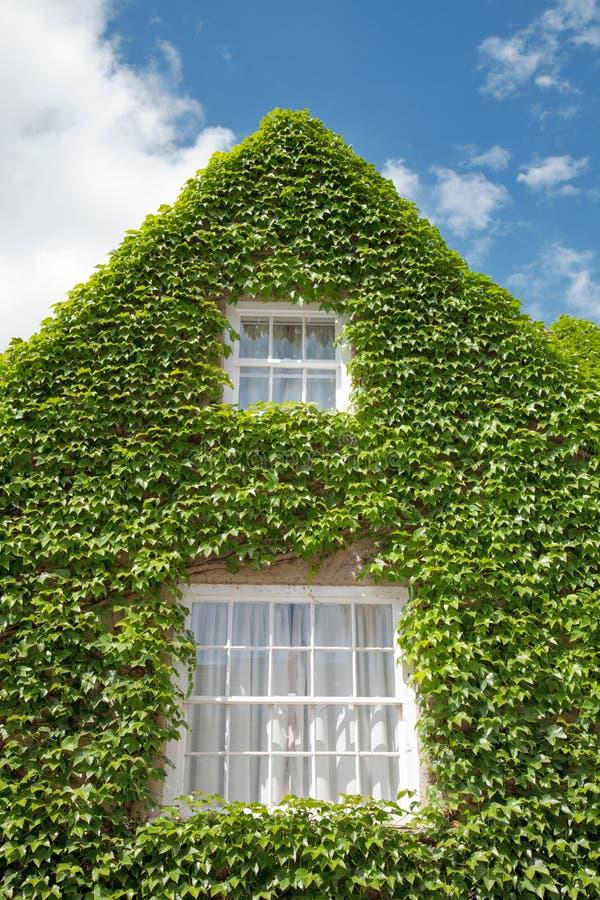 Дом перерастанный с зеленым плющом стоковая фотография