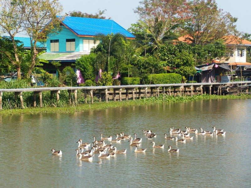 Дом портового района Таиланда стоковое фото