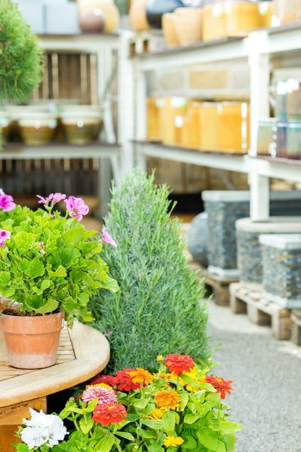 дом сада цветков центра зеленая potted стоковое изображение rf