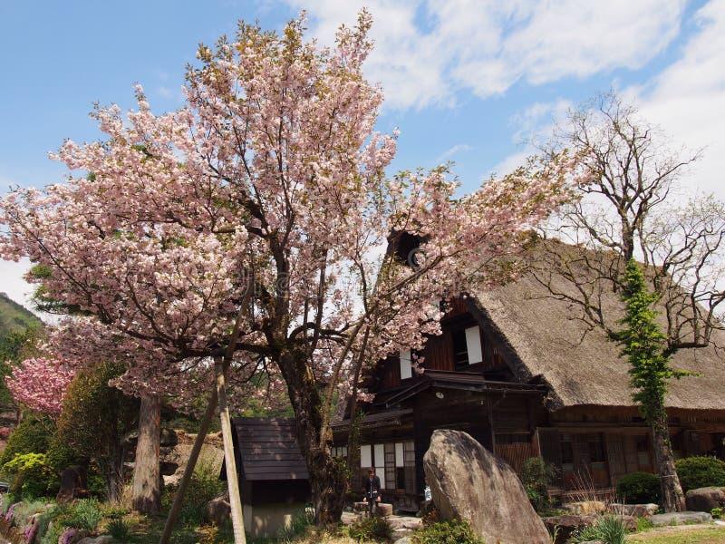 Дом Сакуры стоковая фотография