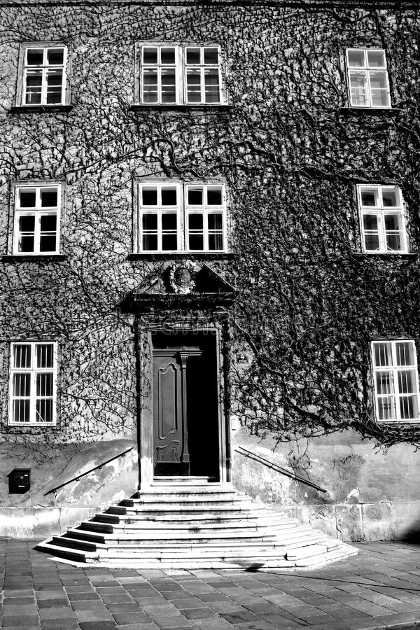 Дом сплетенный с одичалыми виноградинами стоковое фото rf