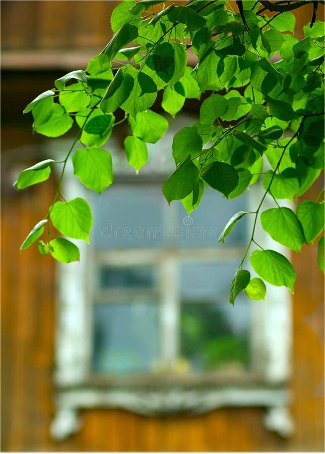 дом страны зеленая выходит окно стоковая фотография rf