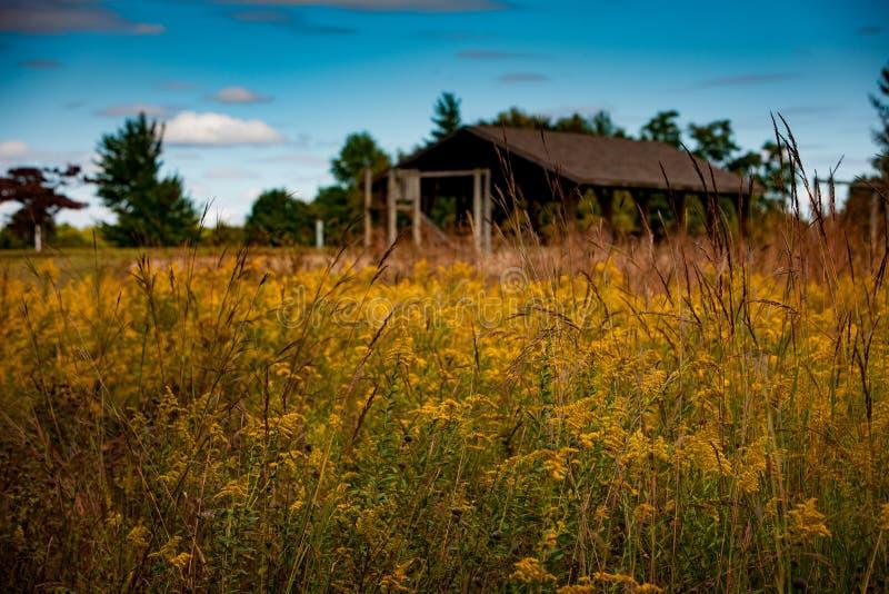 Дом укрытия Wildflower стоковое фото