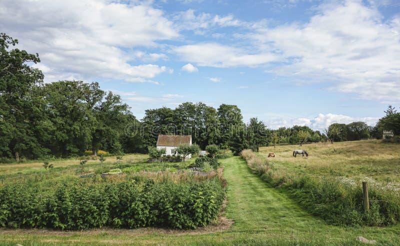 Дом фермы в Дании стоковая фотография