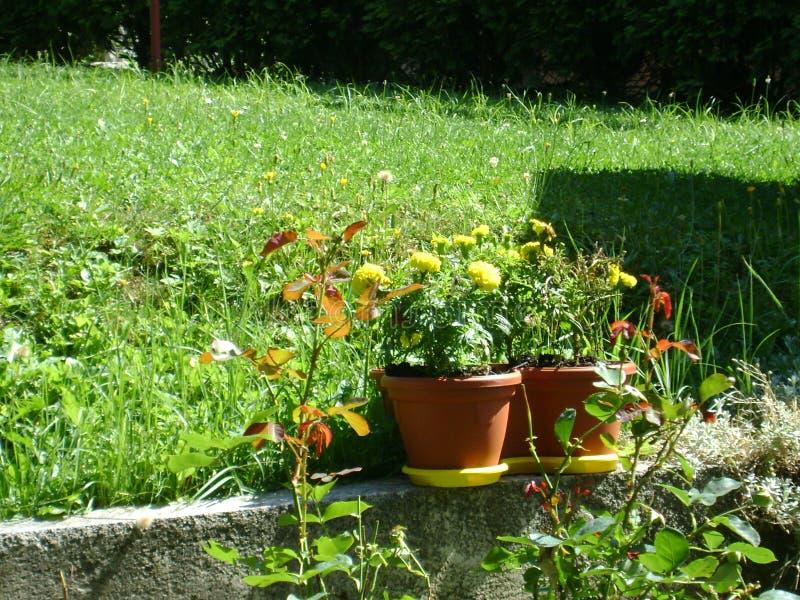Дом цветков стоковое изображение rf
