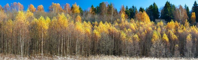 Дополнительная широкая панорама шикарного леса в осени, сценарного ландшафта с приятной теплой солнечностью стоковое фото rf