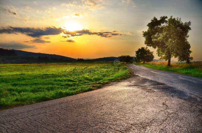 Дорога асфальта, заход солнца над лугом и обширное дерево на вечере лета, небо лист, зеленая трава атмосфера ослабляя Landsc сель стоковая фотография