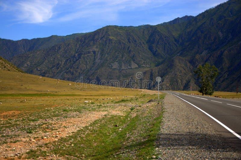 Дорога асфальта идя через поле на ноге высоких гор Тракт Chui, Altai, Сибирь E стоковая фотография rf