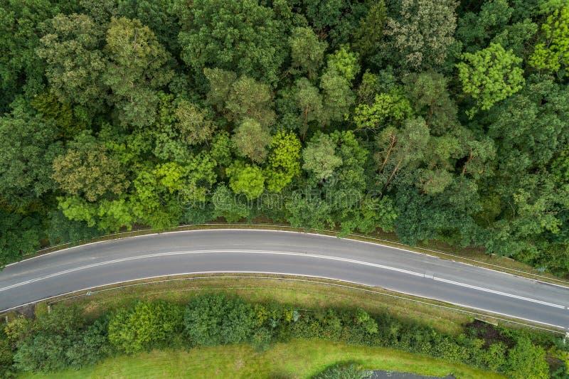 Дорога асфальта через лес стоковые изображения rf