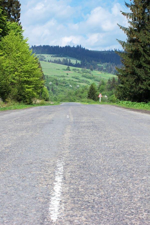Дорога асфальта через горы с елями стоковые фото
