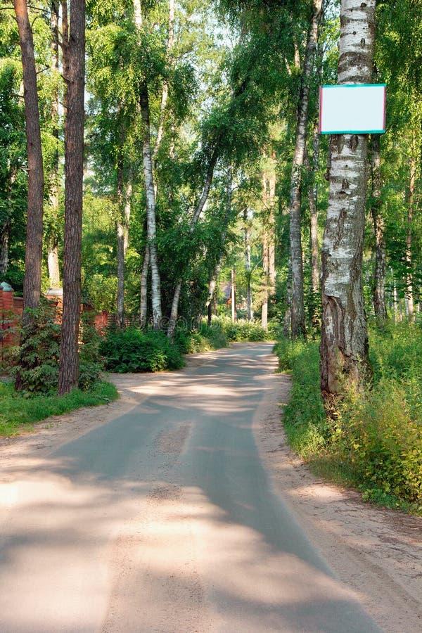 Дорога асфальта через сосны и ярлык на переднем дереве стоковые фото