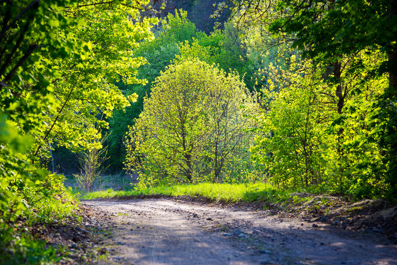 Дорога весны в лесе стоковая фотография