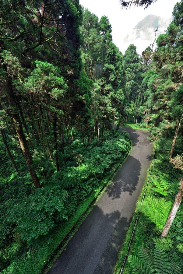 Дорога внутри леса стоковое изображение