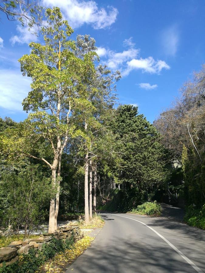 Дорога водит к холмам стоковые изображения rf