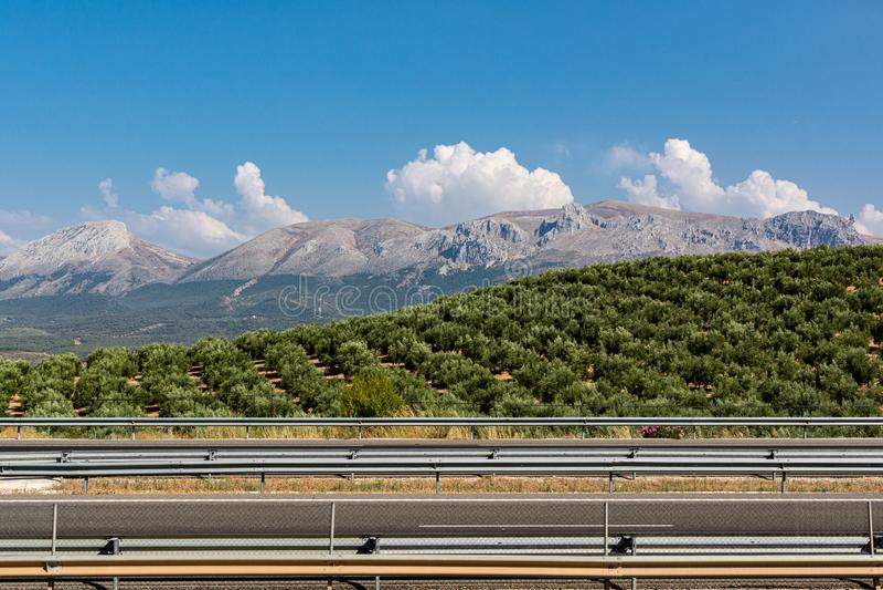 Дорога в горах и оливках стоковые фотографии rf