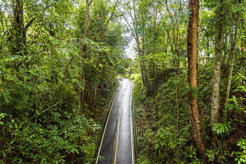 Дорога в глубокой пуще стоковое изображение rf