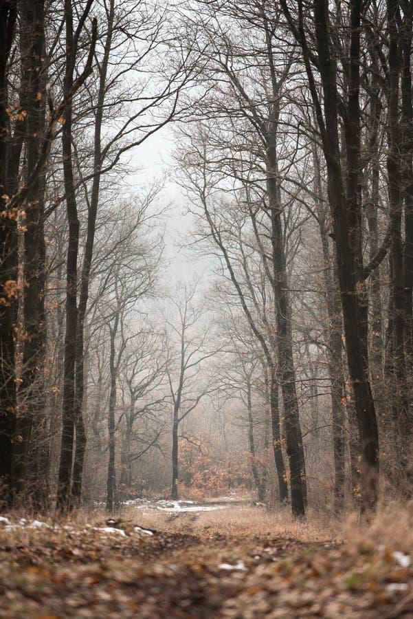 Дорога в древесинах на зиме стоковые изображения rf