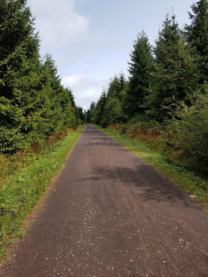 Дорога в древесинах стоковые фотографии rf