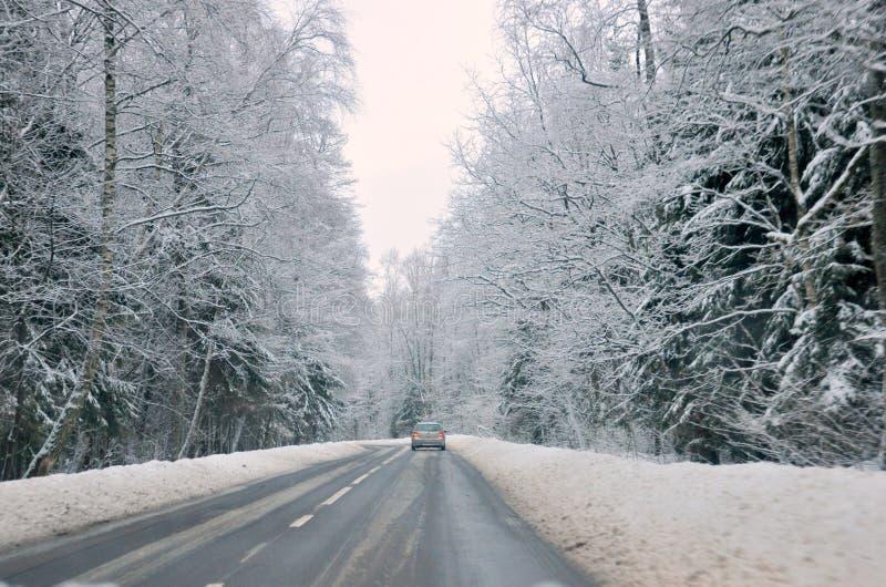 Дорога в древесинах. стоковая фотография