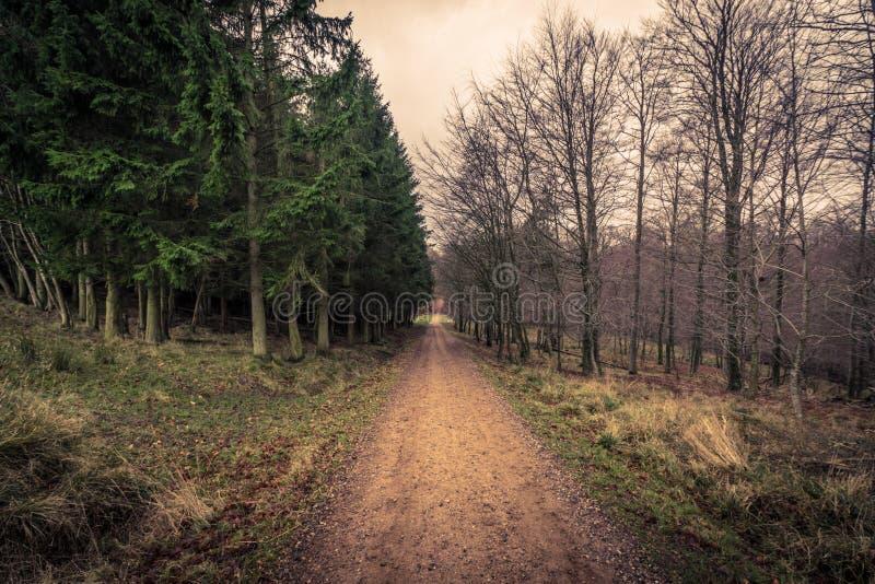 Дорога в лесе на зоре стоковая фотография rf
