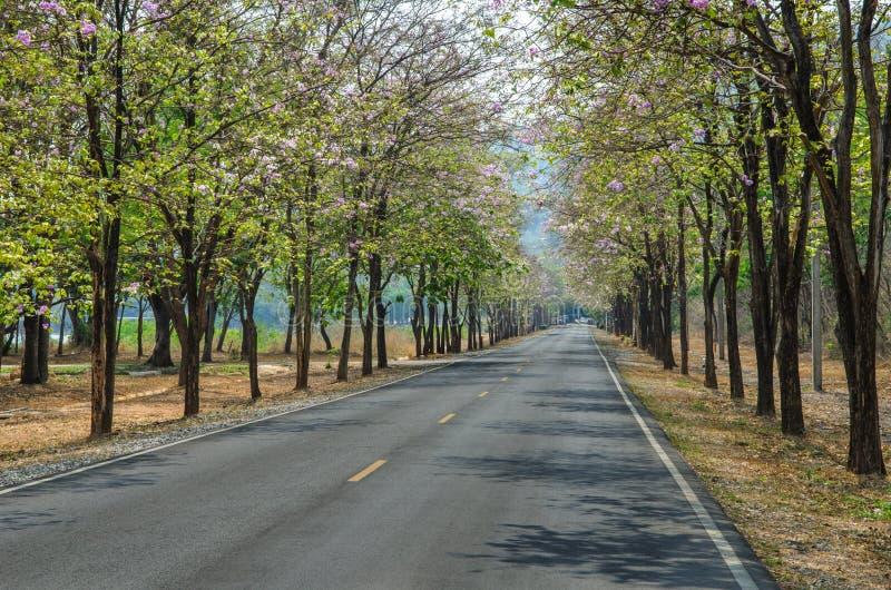 Дорога в лесе стоковое фото rf
