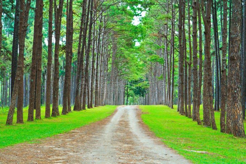 Download Дорога в сосновый лес стоковое изображение. изображение насчитывающей поход - 33739513