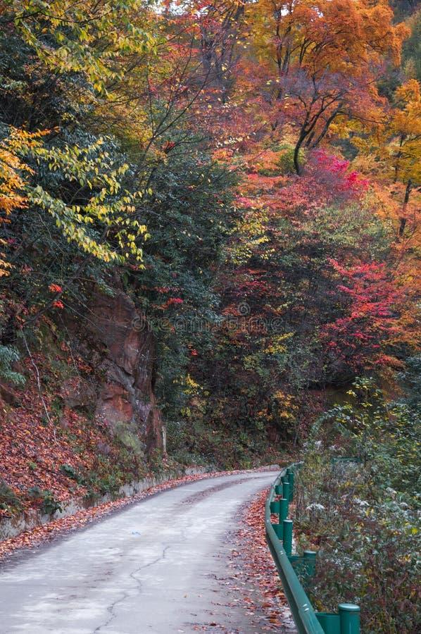 Дорога в золотом лесе падения стоковая фотография