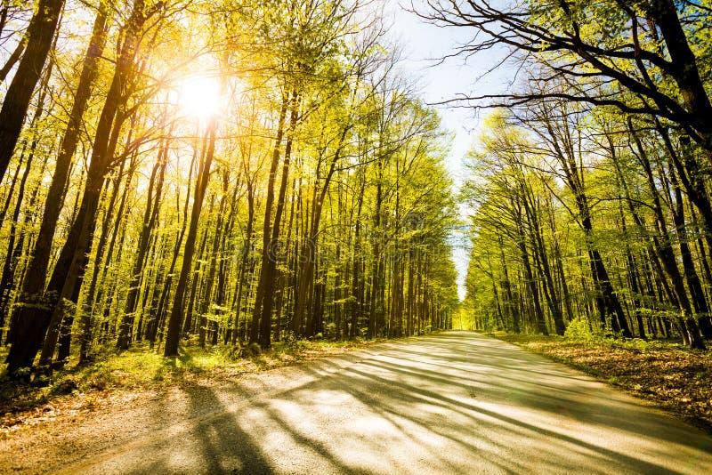 Дорога в красивейшей пуще с солнцем стоковые изображения