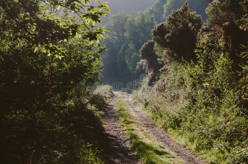 Дорога в лесе на восходе солнца с туманом и солнцем стоковая фотография rf